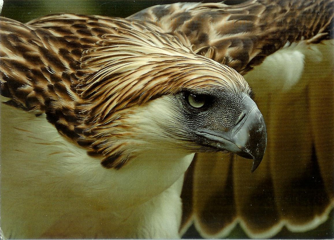 Germany Philippine Eagle furthermore Saint Basils Cathedral additionally 2 besides 20150924 Philips Joins The Climate Groups Call For All City Street Lighting To Switch To LED By 2025 as well What We Do. on globe in a square symbol