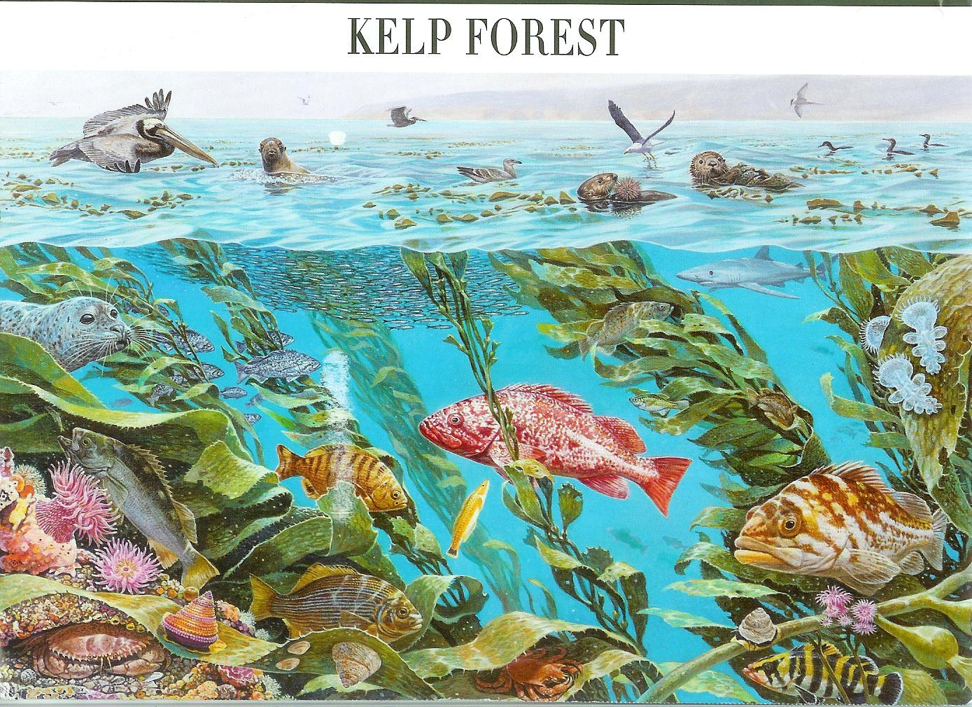 Kelp forest nature of america remembering letters and for Ecosystem pool