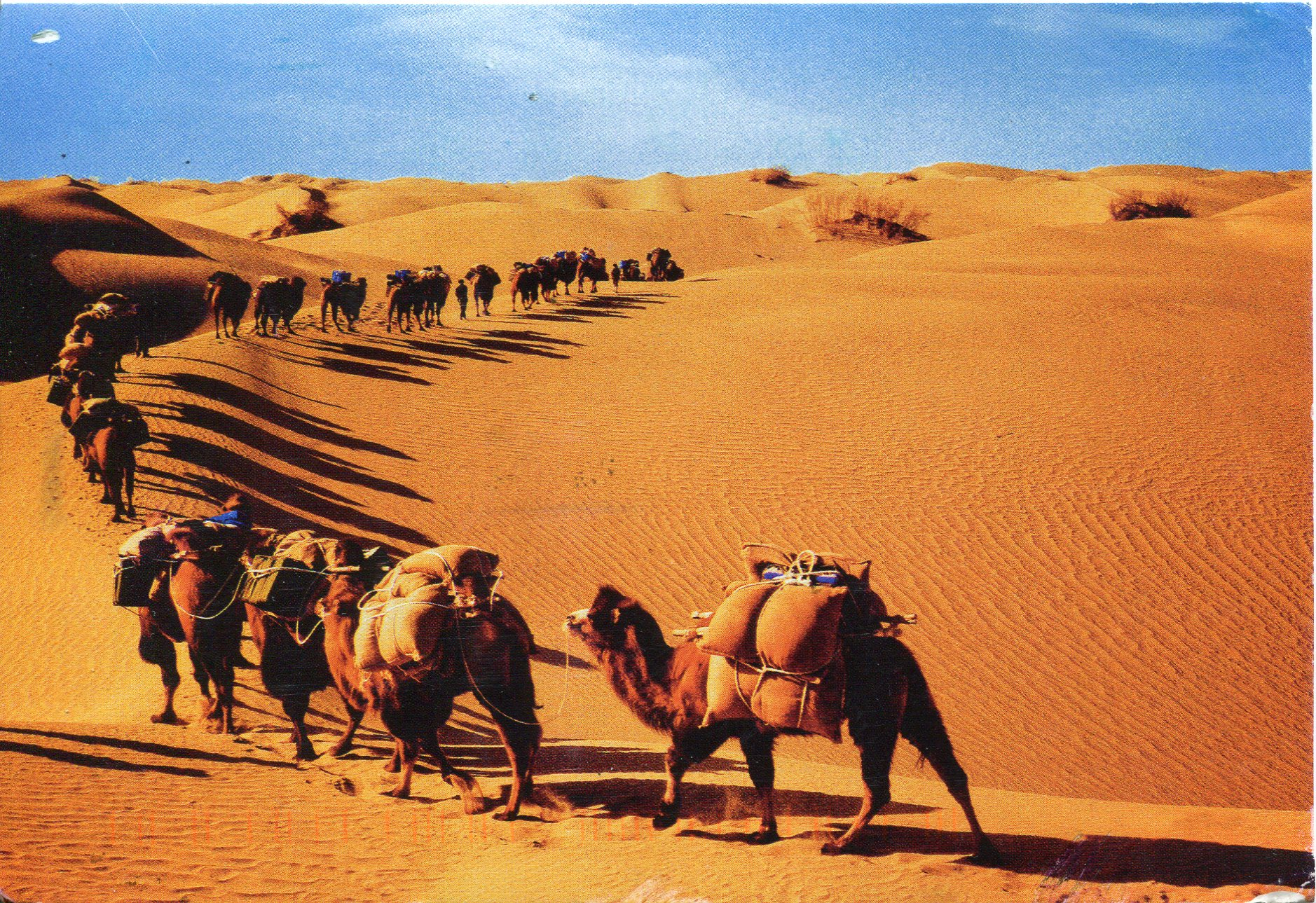 Camel Caravan in Sahara Desert, North Africa - Travel and Escape