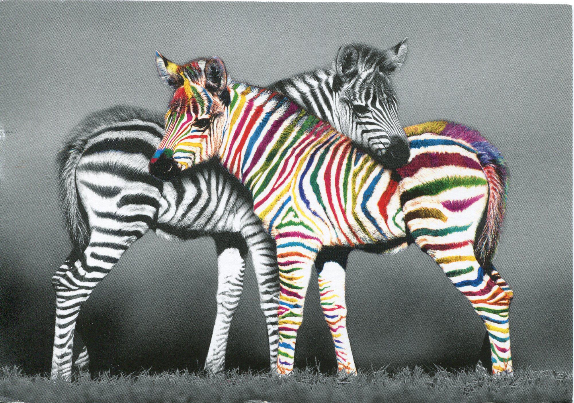 картинка радужная зебра дело