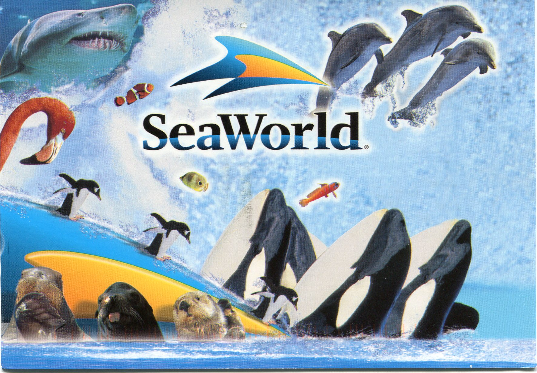 picture relating to Seaworld San Antonio Coupons Printable titled Seaworld gold coastline discounted coupon : Experience island