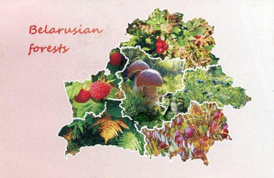 Belarus - Map Forests