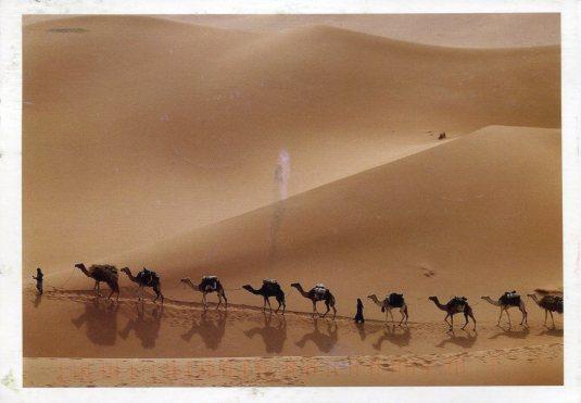 China - Camel Caravan