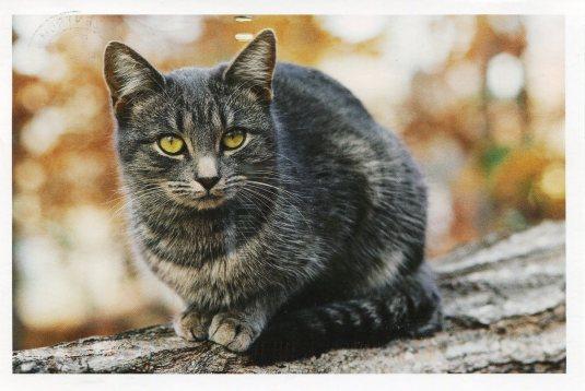 Germany - Grey Cat