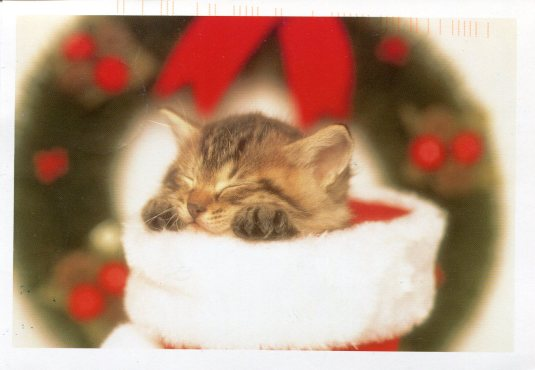 Kitten in Christmas Sock | Remembering Letters and Postcards