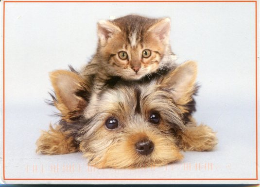 Norway - Kitten and Dog
