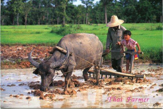 Thailand - Farming