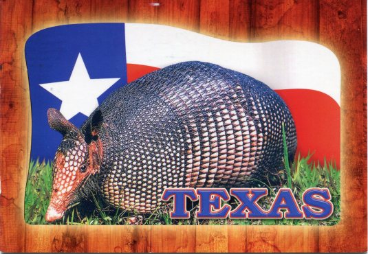 USA - Texas - Armadillo