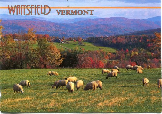 USA - Vermont - Sheep in Pasture