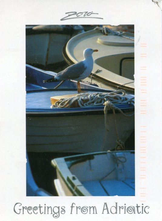 Croatia - Seagull