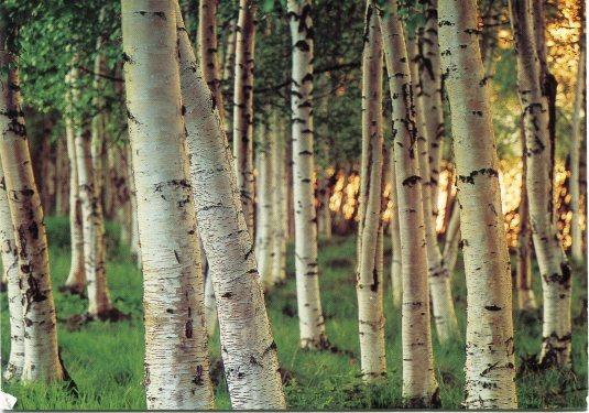 Finland - Forest