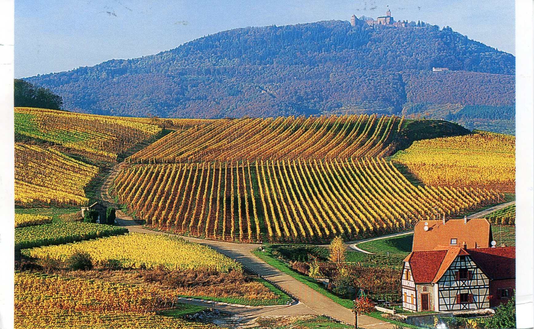 france alsace vinyards