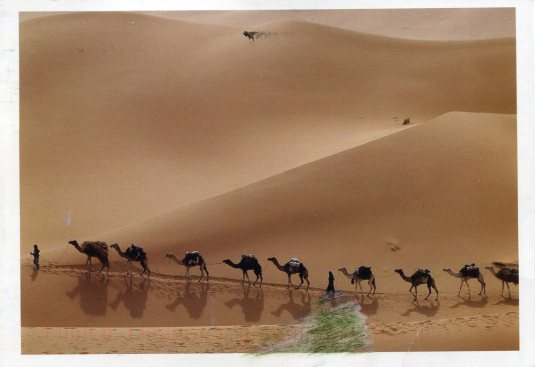 Netherlands - Camel Caravan