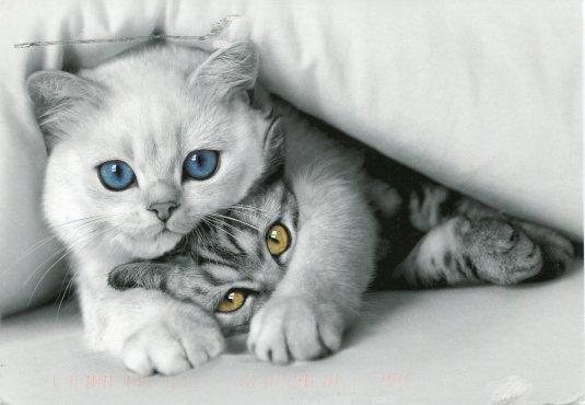 Netherlands - Cats