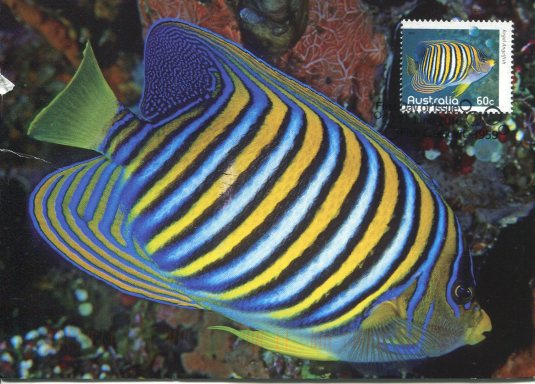 Australia - Regal Angelfish and Stamp