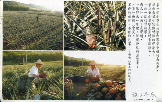 Taiwan -Pineapple Plantation