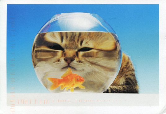 Netherlands - Cat and Fishbowl