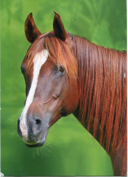 Poland - Horse