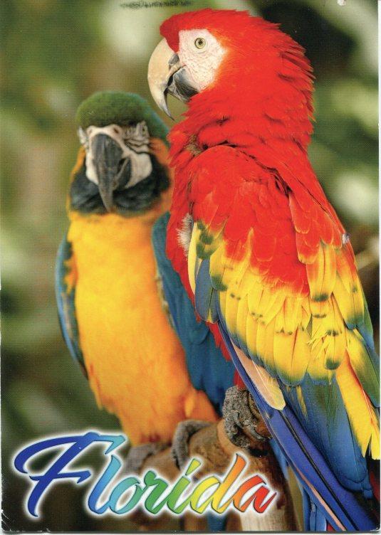 USA - Florida - Parrots