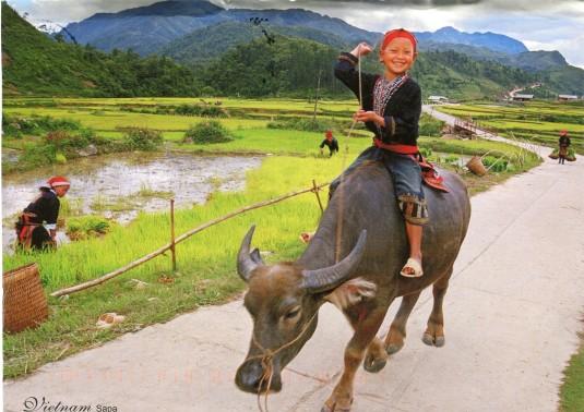 Vietnam - Child on Water Buffalo