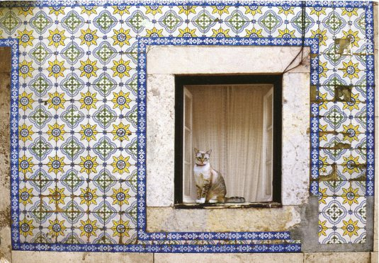 Portugal - Cat and tiled wall