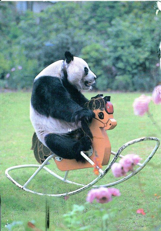 China - Panda on Rocking Horse