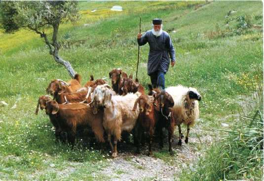 Greece - Goats