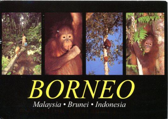 Malaysia - Orang Utan