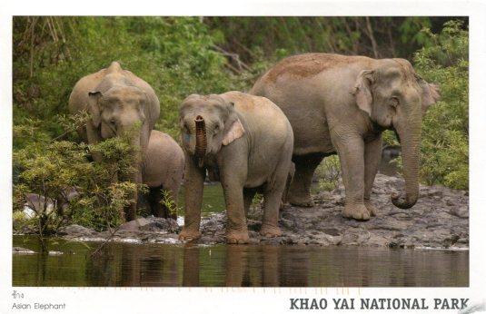Thailand - Asian Elephant
