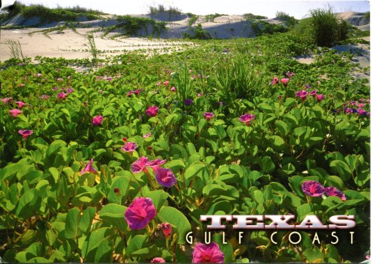 USA - Texas - Railroad Vine
