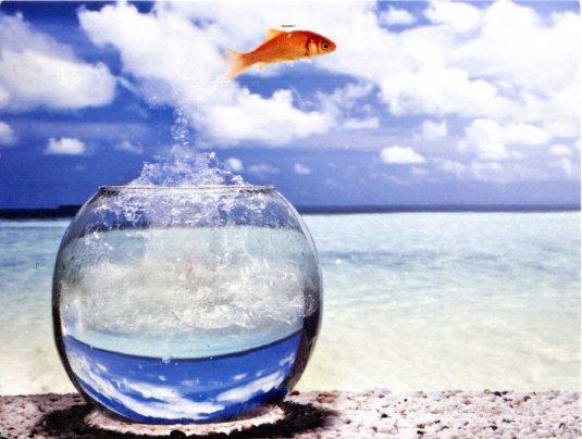Australia - Fish jumping into sea
