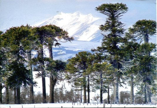 Chili - Conguillío National Park