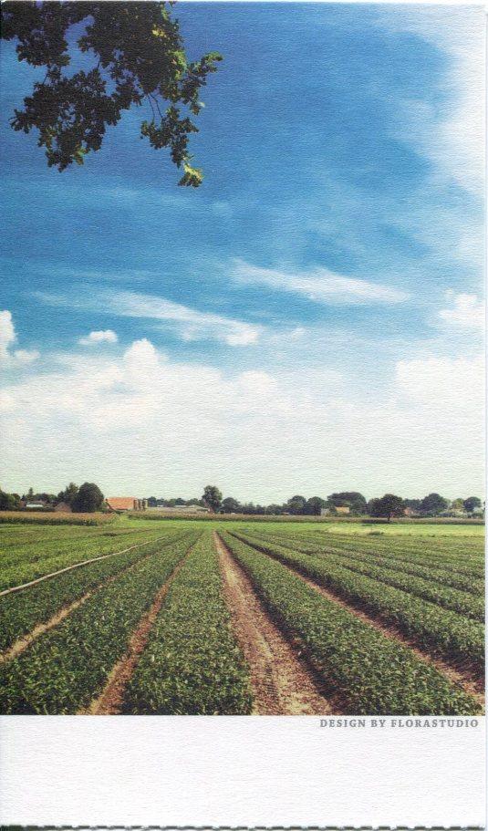 China - Farming