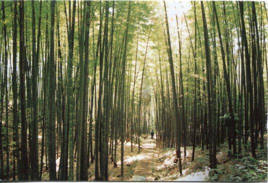 China - Zhuhai Park