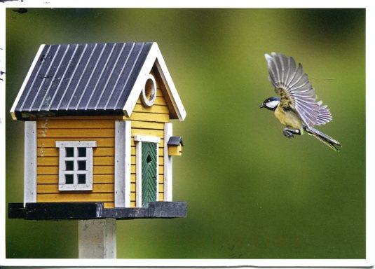 Finland - Bird Coming Home