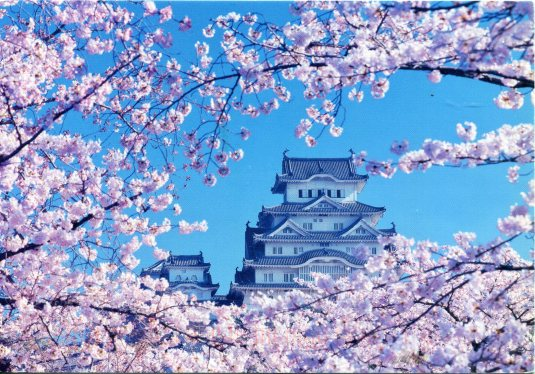 Japan - Himeji Castle Cherry Blossoms