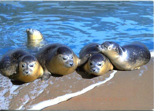 Netherlands - Seals