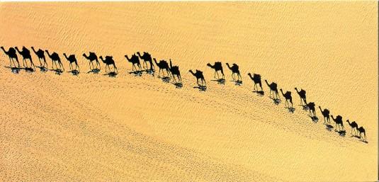 Niger - Camel Caravan
