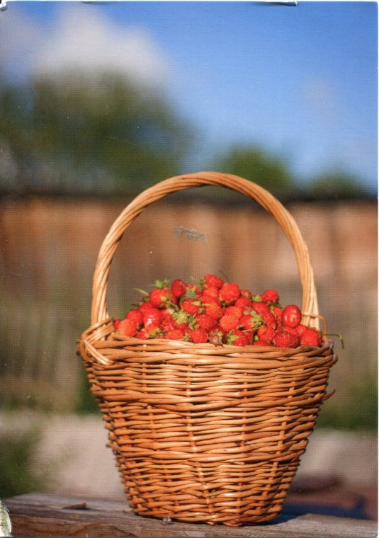 Russia - Basket of Strawberries