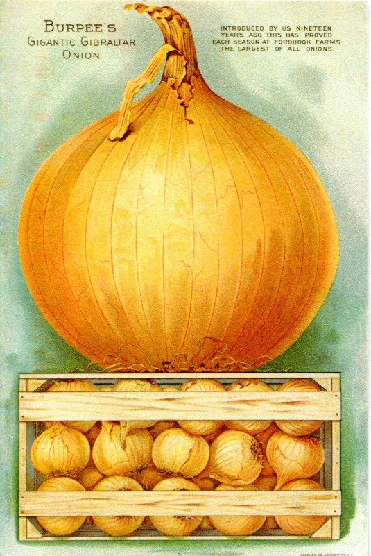 Russia - Burpee Onion Art