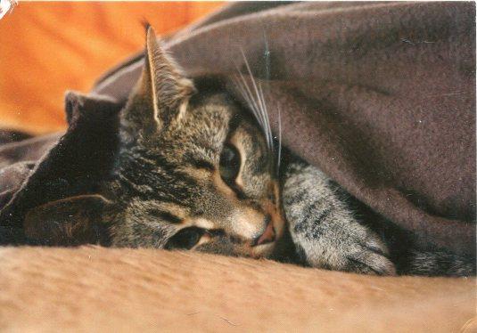 Russia - Cat Sleeping