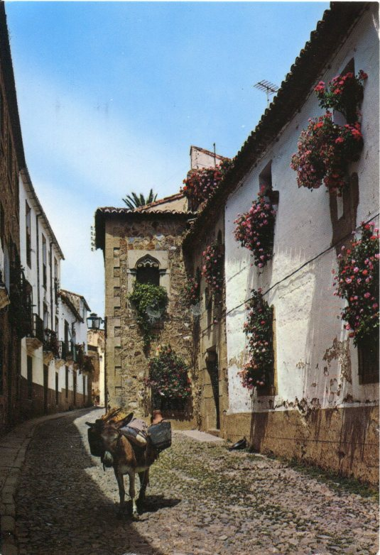 Spain -Caceres Street and Donkey