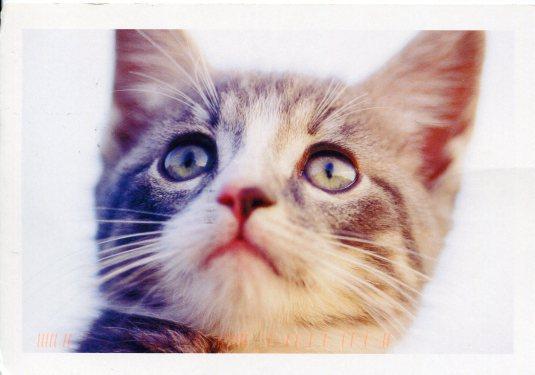 Switzerland - Kitten
