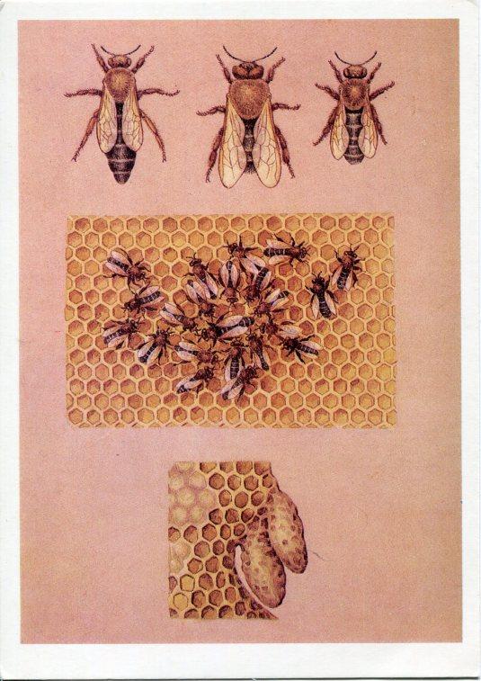 Poland - Bees
