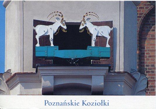 Poland - Poznan Goats