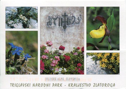 Slovenia - Triglavske NP Wildflowers