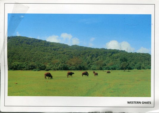 India - Western Ghats
