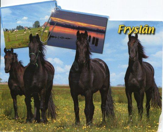 Netherlands - Fryslan Horses