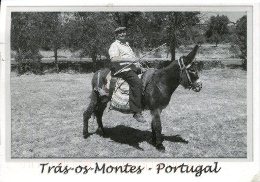 Portugal - Donkey
