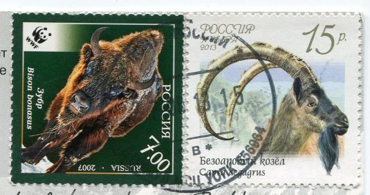 Russia - Camels in the Chuya Steppe stamps 1